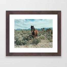 Nevada Desert Horse Framed Art Print