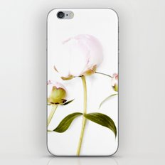 Peony Bulbs iPhone & iPod Skin