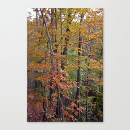 In the Midst of Nature Canvas Print