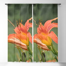 lily bloom and 9 buds Blackout Curtain