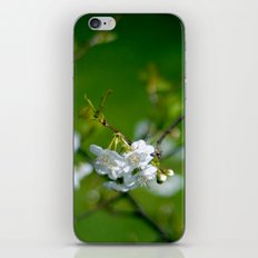 white blossom iPhone & iPod Skin