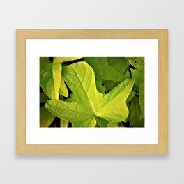 Golden Green Oak Leaves Framed Art Print