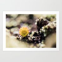 Coltsfoot in the Sunlight Art Print