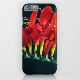 Crocosomia Lucifer Montbretia Red Floral iPhone Case