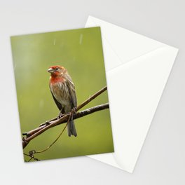 House Finch in the Rain Stationery Cards