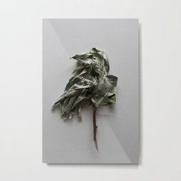 Olea twig herbal wall art Metal Print