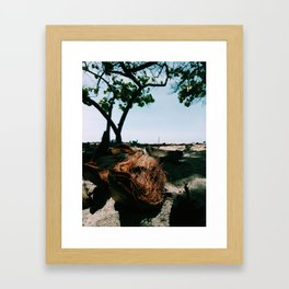 Open coconut laying under palms in colombian caribbean Framed Art Print