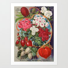 Antique seed mix Art Print