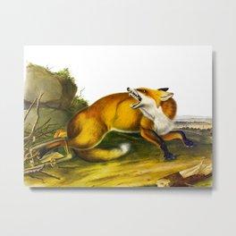 Red Fox Vintage Animal Illustration Metal Print