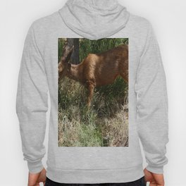 Mule Deer At Zion Park Hoody