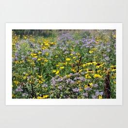 Native Prairie Flowers Art Print
