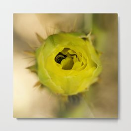 Englemann's Prickly Pear With A Hiding Bee Metal Print