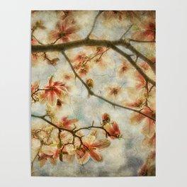 Magnolia Skys Poster