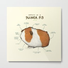 Anatomy of a Guinea Pig Metal Print