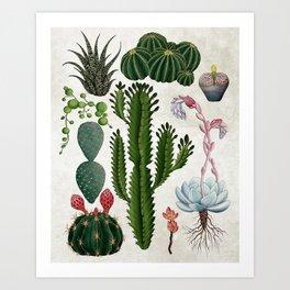 Cacti Family Art Print