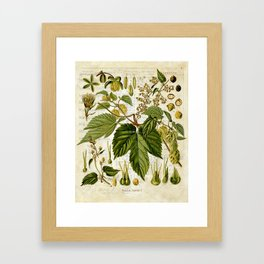 Common Hop Botanical Print on Vintage almanac collage Framed Art Print