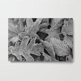 Frosty Leaves BW 01 Metal Print