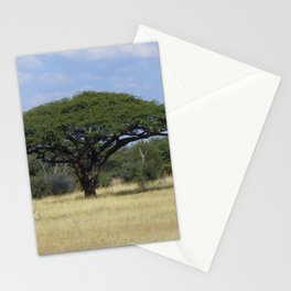 Camel Thorn Tree Stationery Cards
