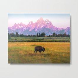Grand Tetons Bison Metal Print