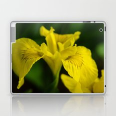Yellow Iris Laptop & iPad Skin