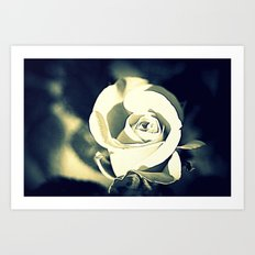 Night Rose Art Print