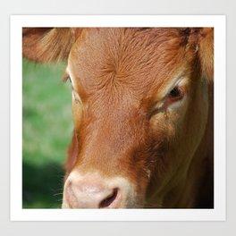 Crying Cow Art Print