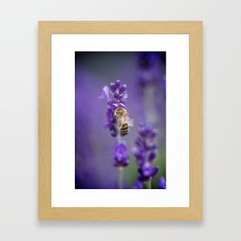 Lavender Bee Framed Art Print