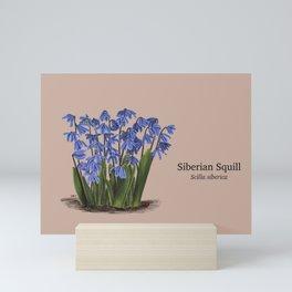 Siberian Squill Botanical Illustration Mini Art Print