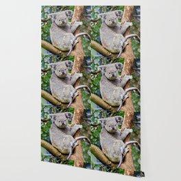 Australian Koala Bear Photo Wallpaper