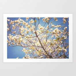 Dogwood Tree - Spring Flowering Tree Photography Art Print