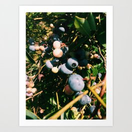 On the Vine Art Print