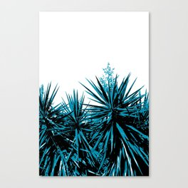 Yucca Trees Canvas Print