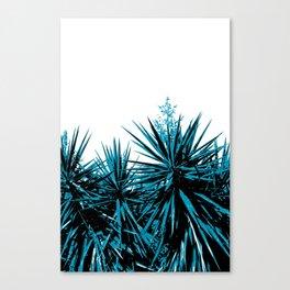 Yucca Trees Canvas Print
