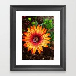The Flower Sun Framed Art Print