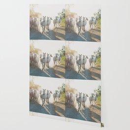 Camargue Horses XIII Wallpaper
