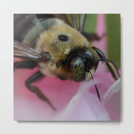 bumble bee, close up Metal Print