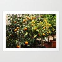 Italian Oranges Art Print