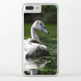 Mute Swan Cygnet Clear iPhone Case