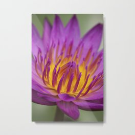 Water Lily - portrait version Metal Print