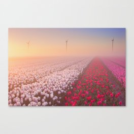 Sunrise and fog over rows of blooming tulips, The Netherlands Canvas Print