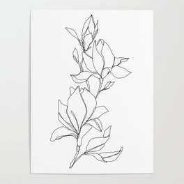 Botanical illustration line drawing - Magnolia Poster