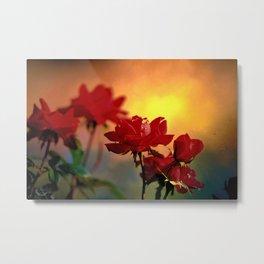 Sunrise On Roses  Metal Print