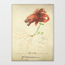 Planimarium -tigris striatus lilium Canvas Print