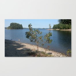 Tree on the Shore Canvas Print