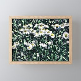 Chamomile Framed Mini Art Print