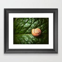 The Little Sleeping Snail Framed Art Print