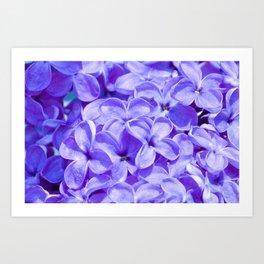 Blue Lilacs by Teresa Thompson Art Print
