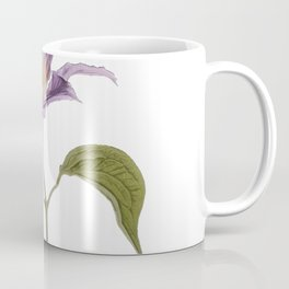 Clematis buttercup family Ranunculaceae garden hybrids jackmanii flowers Coffee Mug