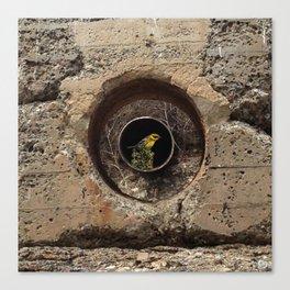 concrete with bird Canvas Print