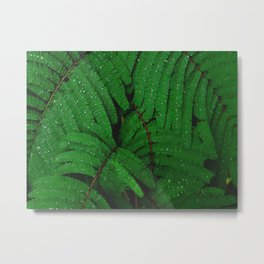 Layers Of Wet Green Fern Leaves Patterns In Nature Metal Print